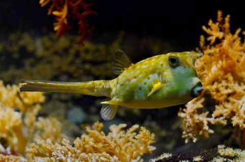 sea nature ocean fish